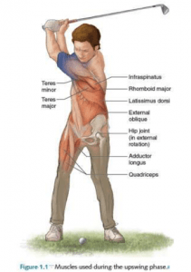 muscles used to optimize the golf backswing/upswing